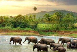 Şri-Lanka turu